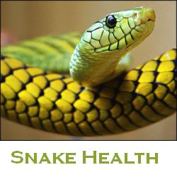 snake healt