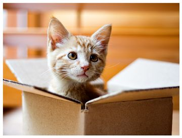 Training Your Cat To Use A Closed Litter Box