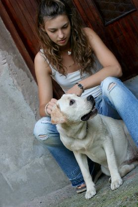 Dog UTI remedies