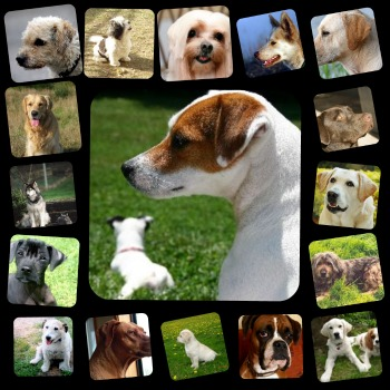 Dog Training Tips Sit Stay With Treats
