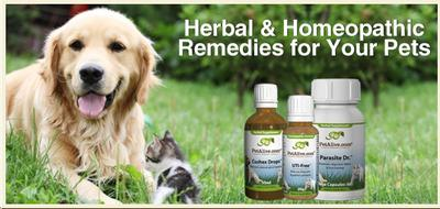Promote Native Remedy products!