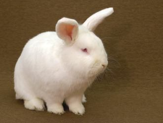 Rabbits as Pets for Kids