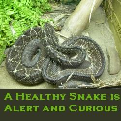 reptile health and care