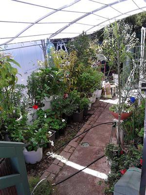 bucket and big bin gardening