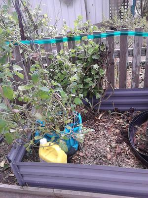 Secret Garden, getting bags and buckets to put in the 'raised beds'of community garden.